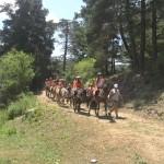 Конный привод через гору | Lucky Kids